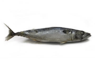 Скумбрия 400-600 сухой заморозки Главрыба